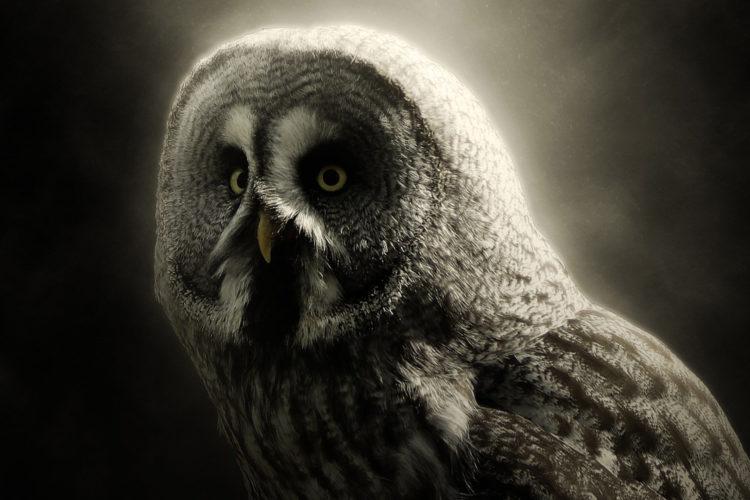 Owl focus